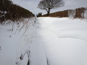 Snowy lane out of Knighton